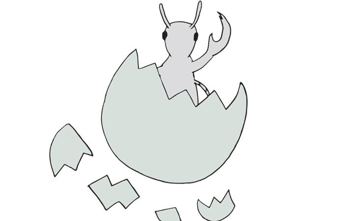 headlice-feature-image