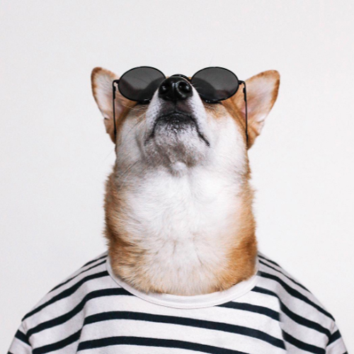 menswear-dog