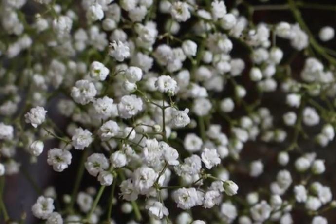 flowers birth