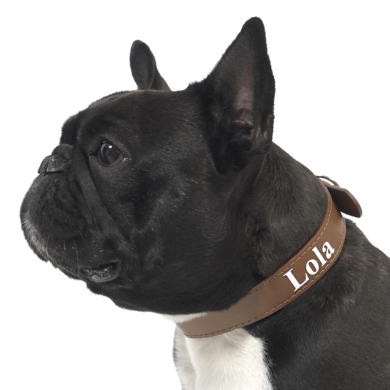 personalised-dog-collar