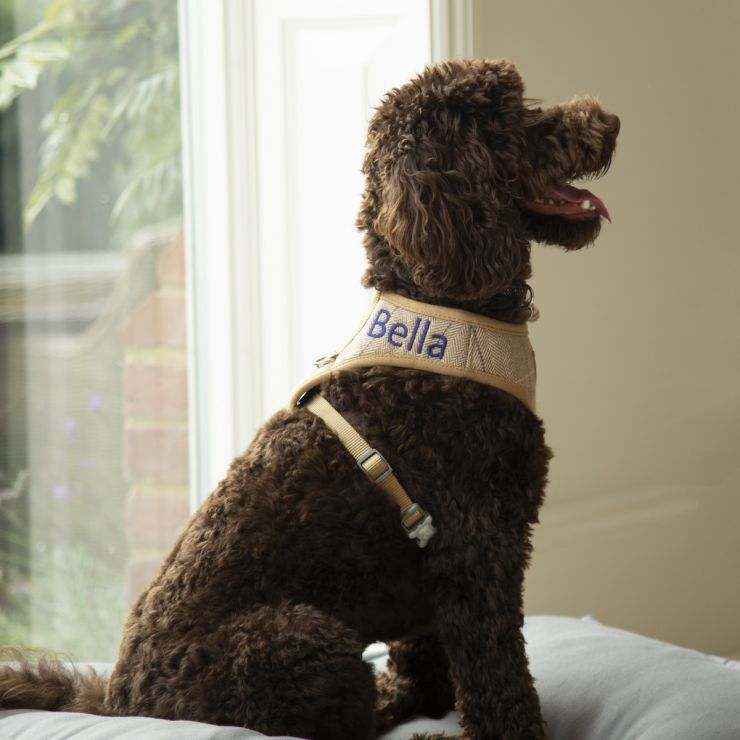 Personalised Tweed Dog Harness - Models